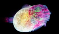 Iori Tomita – animais transparentes